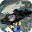 Photo 3 - Labrador Retriever Mix Puppy for adoption in Coal City, West Virginia - Bart