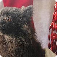 Adopt A Pet :: Brownie - Honolulu, HI