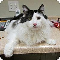 Adopt A Pet :: Ben Shockley - Gilbert, AZ
