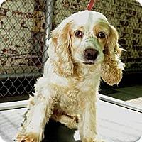 Adopt A Pet :: Iris - New York, NY