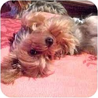 Adopt A Pet :: Louis - Dartmouth, MA