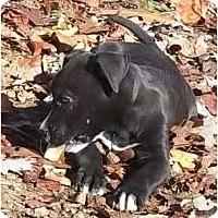 Adopt A Pet :: Atalay - Plainfield, CT