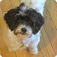 Adopt A Pet :: Courtney - Mt Gretna, PA