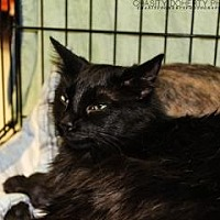 Adopt A Pet :: Dusty - Santa Fe, TX
