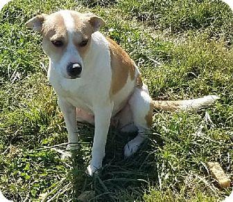 Foxhound Mix Dog for adoption in Avon, New York - Megz