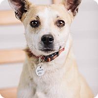Adopt A Pet :: Felicity - Portland, OR