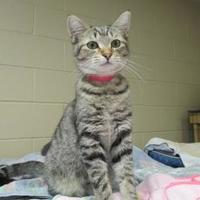 Adopt A Pet :: Michaela - Erie, PA