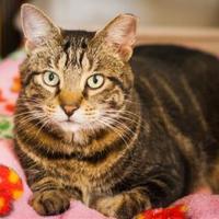 Adopt A Pet :: Pegasus - Chicago, IL