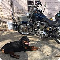 Adopt A Pet :: Max - Kaufman, TX