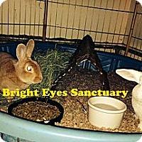Adopt A Pet :: Jezebel&Fibonacci - Rockville, MD