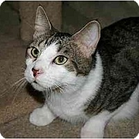 Adopt A Pet :: Augie - Montgomery, IL