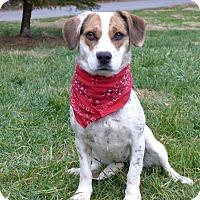 Adopt A Pet :: Freckles - Mocksville, NC