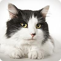 Adopt A Pet :: Huckleberry - New York, NY