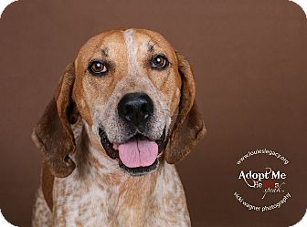 Redtick Coonhound Mix Dog for adoption in Cincinnati, Ohio - Andy