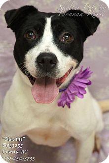 Pointer Mix Puppy for adoption in Newnan City, Georgia - Maxine