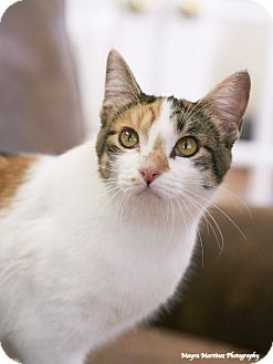 Domestic Shorthair Cat for adoption in Homewood, Alabama - MJ