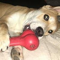 Adopt A Pet :: CB - San Antonio, TX
