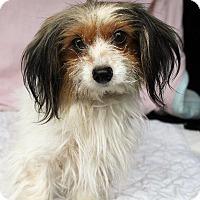 Adopt A Pet :: Winnie - Ocala, FL