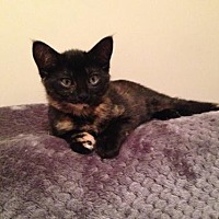 Adopt A Pet :: Katja     171251 - Atlanta, GA