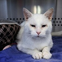 Adopt A Pet :: Walter S. Platte - Denver, CO