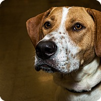 Adopt A Pet :: Roos - Livonia, MI