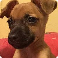 Adopt A Pet :: Kishi Kay - Boston, MA