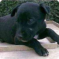 Adopt A Pet :: JUSTIN - dewey, AZ