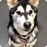 Adopt A Pet :: Rio - Lancaster, OH