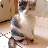 Adopt A Pet :: Poptart - Lafayette, CA