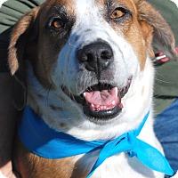 Adopt A Pet :: Wilson - Homewood, AL