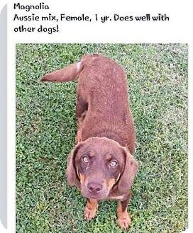 Australian Cattle Dog/Beagle Mix Dog for adoption in Greenville, Kentucky - Magnolia URGENT PREGNANT