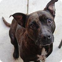 Adopt A Pet :: Precious - Winchester, VA