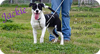 Boxer Mix Dog for adoption in Buchanan Dam, Texas - Jackie