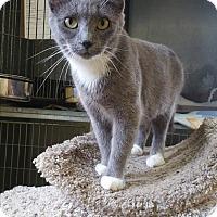 Adopt A Pet :: HAZEL - Baudette, MN