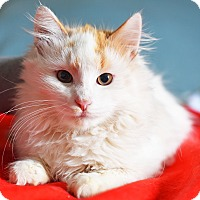 Adopt A Pet :: Taylor - Xenia, OH