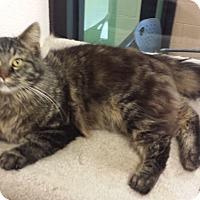 Adopt A Pet :: Smoke - Gadsden, AL