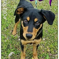 Adopt A Pet :: Izzy - Commerce, TX