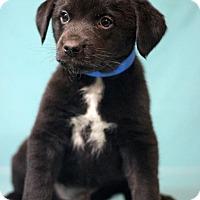 Adopt A Pet :: Aiea - Waldorf, MD