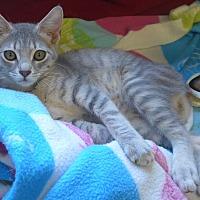 Adopt A Pet :: Jasmine - Manning, SC