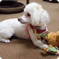 Adopt A Pet :: ANNALEE - Melbourne, FL