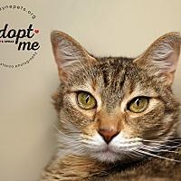 Adopt A Pet :: Cece - Lyons, NY