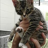 Adopt A Pet :: Clarissa - Barnwell, SC