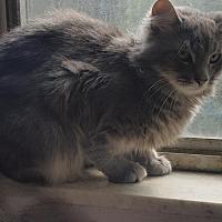Adopt A Pet :: Smokey - Morgantown, WV