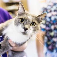 Adopt A Pet :: Rochelle - Mount Vernon, OH