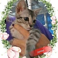 Adopt A Pet :: Junior - San Bernardino, CA