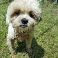 Adopt A Pet :: Buster - Moultrie, GA