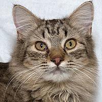Adopt A Pet :: Hershey M - Sacramento, CA