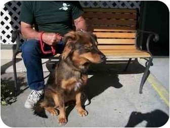 Collie/Shepherd (Unknown Type) Mix Dog for adoption in Slidell, Louisiana - Webby