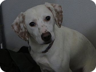 Hound (Unknown Type) Mix Dog for adoption in Kalamazoo, Michigan - Jasper