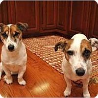 Adopt A Pet :: Vega - Thomasville, NC